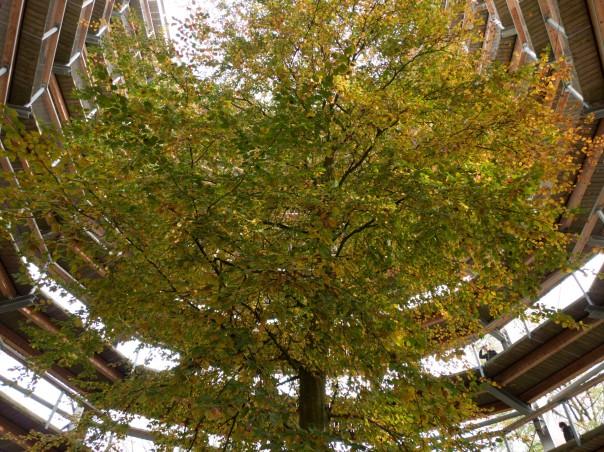 Die Hauptattraktion, von unten: das Leben eines Baumes zum